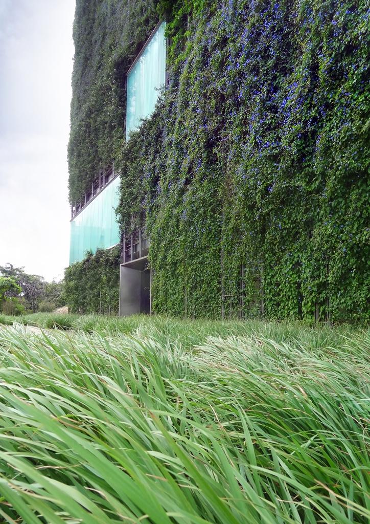 North facade flowering